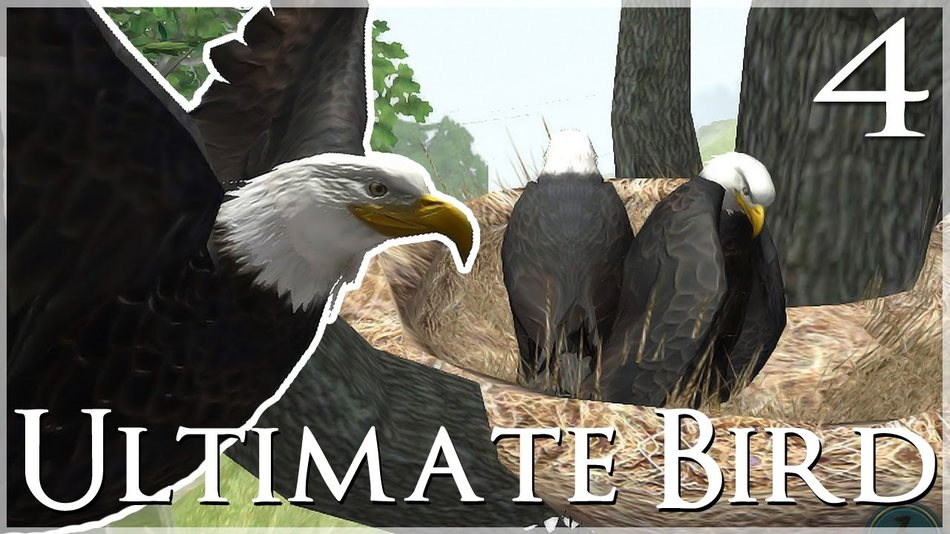 Ultimate Bird Simulator